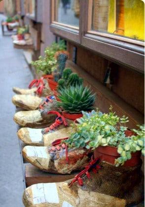 Cosa fare a Montepulciano- Scape- Botteghe- Piantine grasse