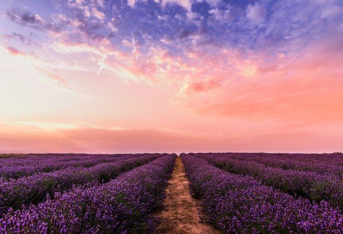 campo-lavanda-tramonto-colori-jpg
