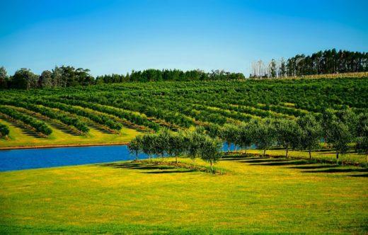 turismo rurale uruguaiano-frutteto-alberi-natura-verde-jpg