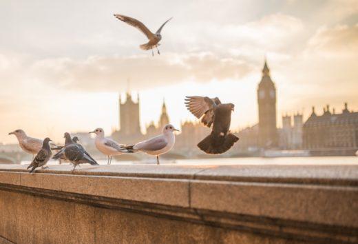 tour londinese-londra-panorama-piccioni-tramonto