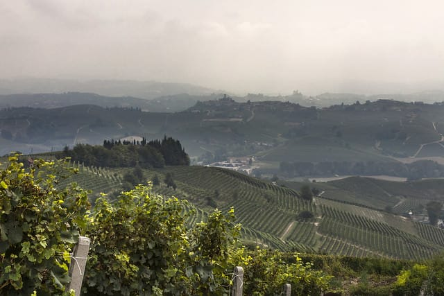 Langhe- La Morra-Vigneti- Colline-Panorama