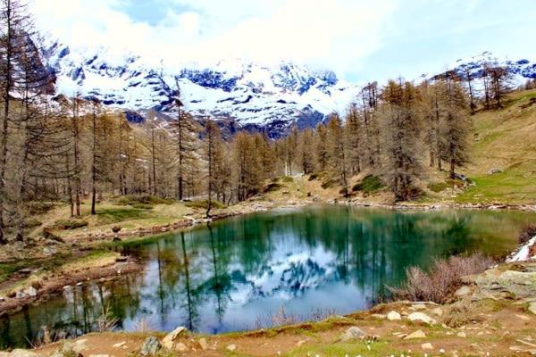 Cosa vedere nei dintorni di Aosta- Lago Blu- Cervinia- Cervino- alberi