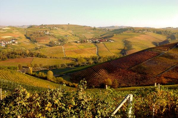 Cosa vedere a Neive e dintorni- Barbaresco- vitigni- autunno-panorama