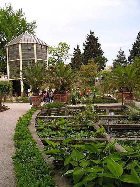Orto botanico di Padova- vasca- ambiente acqua dolce- piante