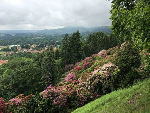 Più belle fioriture in italia- Oasi Zegna- Fioritura rododendri- Biella