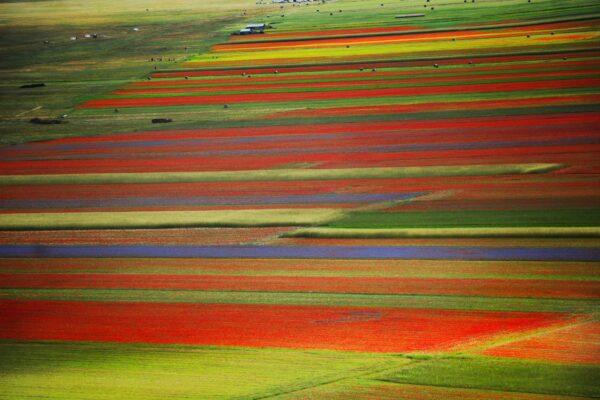 le Fioriture più belle in Italia- Lenticchie- Castelluccio di Norcia
