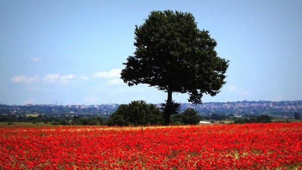 Le più belle fioriture in Italia. Quando e dove