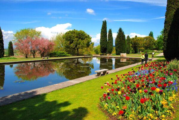 Fioritura dei tulipani-parco sigurtà- Valleggio sul mincio